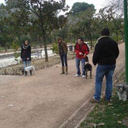 Curso adiestramiento canino Córdoba