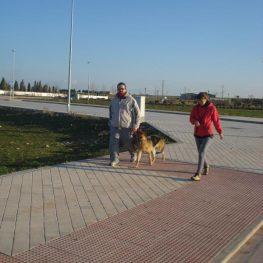 Curso de adiestramiento canino en Alcázar de San Juan