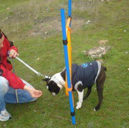 Curso de adiestramiento canino en Tomelloso