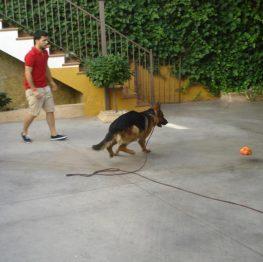 adiestramiento canino la Solana