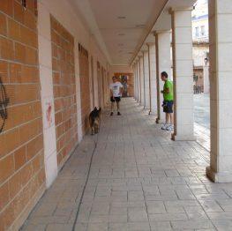 Adiestramiento canino Tomelloso