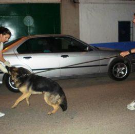 adiestramiento canino socuéllamos