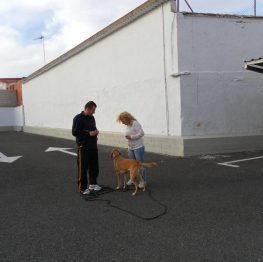Adiestramiento de perros en Tomelloso