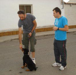 Adiestramiento canino en Argamasilla de Alba