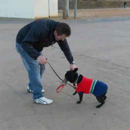 Adiestramiento canino en Puertollano