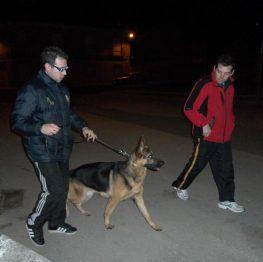 Adiestramiento canino en Manzanares