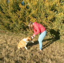 Adiestramiento canino en Valdepeñas