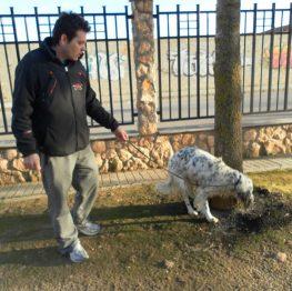 Adiestramiento canino en Pinto
