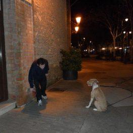 Adiestramiento para perros en Tomelloso