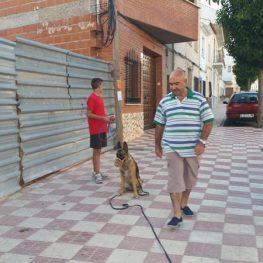 Adiestramiento canino Adiestramiento canino en Campo de Criptanaen Campo de Criptana