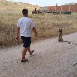 Adiestramiento canino en Campo de Criptana