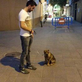 Adiestramiento de perros en Socuéllamos