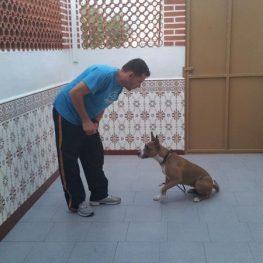 Adiestramiento canino en Móstoles