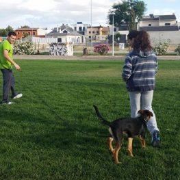 Adiestramiento canino en Daimiel