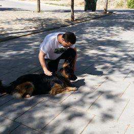Adiestramiento canino Toledo