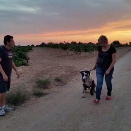 Adiestramiento canino en Fuenlabrada