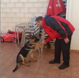 Adiestramiento canino Getafe