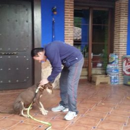 Adiestramiento canino en Parla