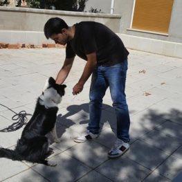 Adiestramiento canino en Alcorcón