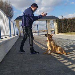 Adiestramiento canino en Alcalá de Henares