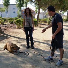 Adiestramiento canino Boadilla del Monte