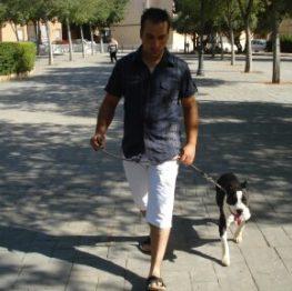 Adiestramiento canino Albacete
