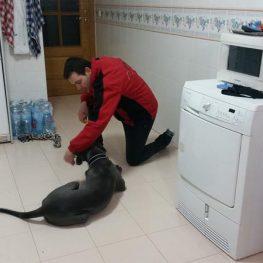 Adiestramiento canino Villarrobledo