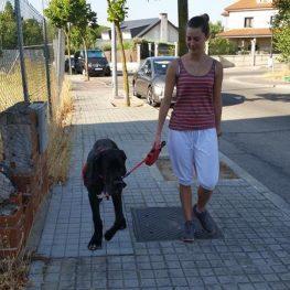 Adiestramiento canino en Villaviciosa de Odón