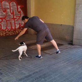 Adiestramiento canino en San Sebastián de los Reyes