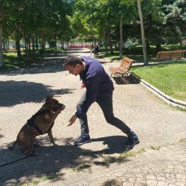 Adiestramiento canino en Colmenar Viejo