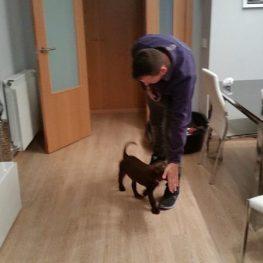 Adiestramiento canino en Azuqueca de Henares