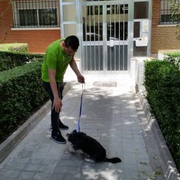 Adiestramiento canino en Paracuellos del Jarama