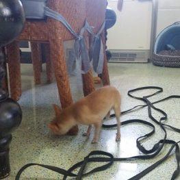 Adiestramiento canino Leganés