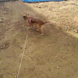 Residencia canina Getafe