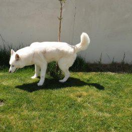 residencia canina leganes