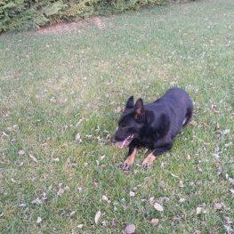 Residencia canina Parla