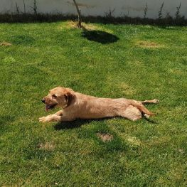 Residencia canina Alcobendas