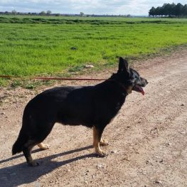Residencia canina Coslada